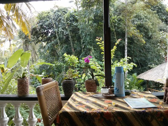 White Lotus Yoga & Meditation Centre: The view from the daybed