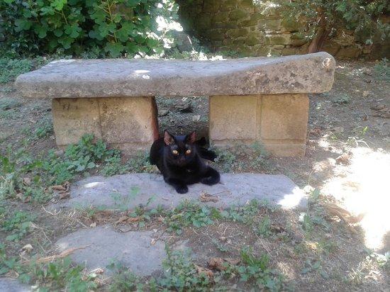 La Casa del Melograno: carolina sotto la sua adorata panchina i giardino
