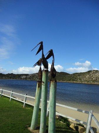 Guilderton Caravan Park: pelicans