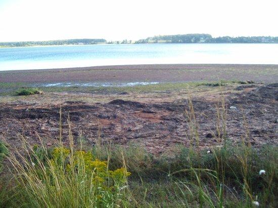Clark's Sunny Isle Motel : The beach behind the inn