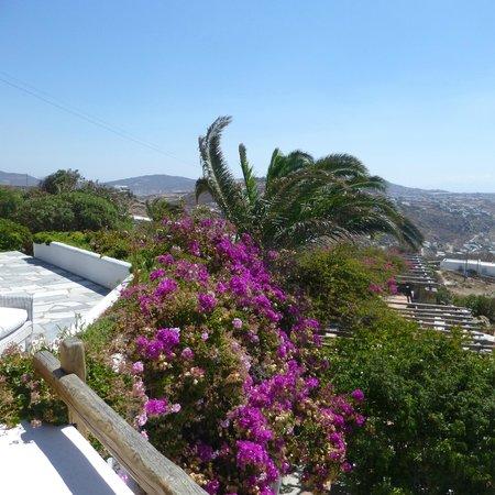 Agnandi Homes and Studios: panorama