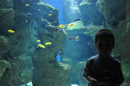 Acuario de Zaragoza: River Aquarium Zgz