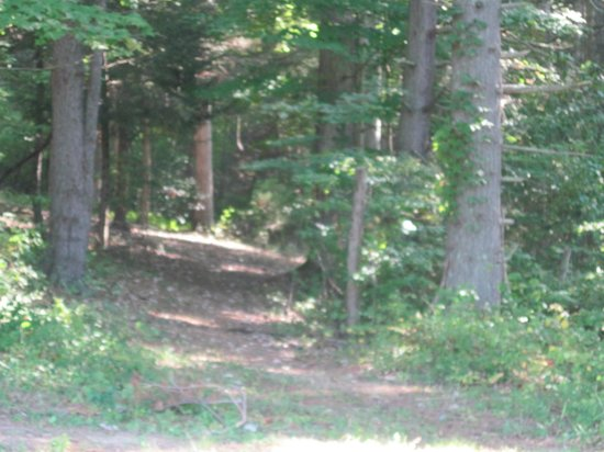 Cabins at Pine Haven: Walking Trail in the woods