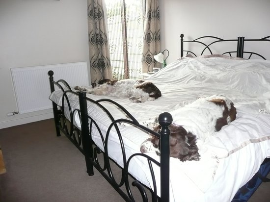 Low Nest Farm B & B: Proof Our Dogs Love It!!!!