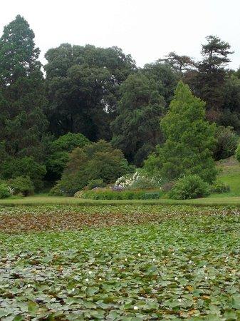 Castle Kennedy Gardens: lilly pond