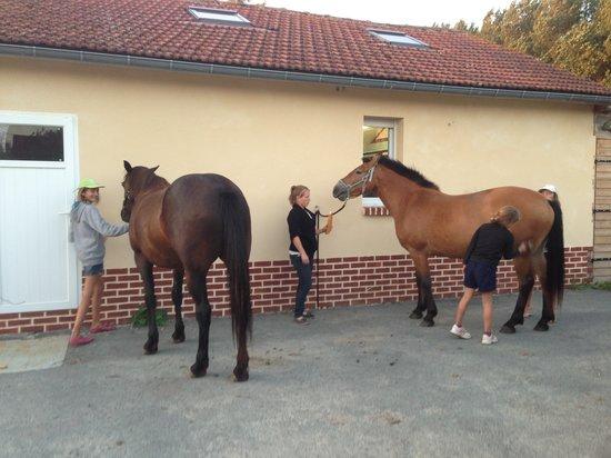 Camping des Oiseaux: les chevaux du camping