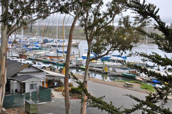 Museum of Natural History: Marina in Estuary at Natural History Museum