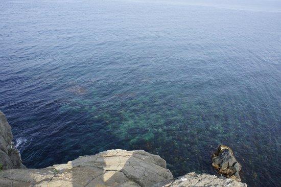 Sakyobana: 透明度の高い海
