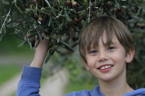 Kogman & Keisie Guest Farm: Our boy standing underneath an olive tree