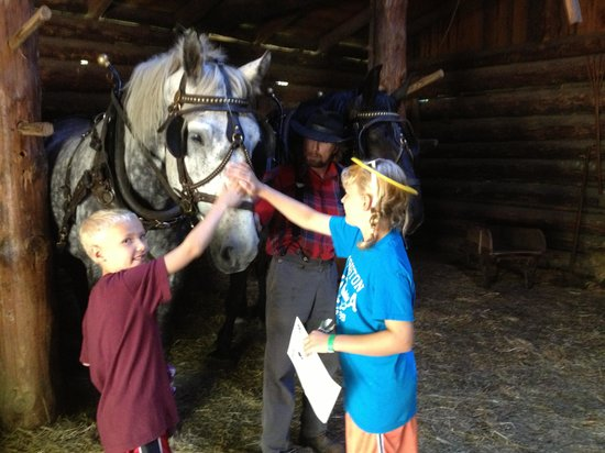 Forest History Center: Petting the horse