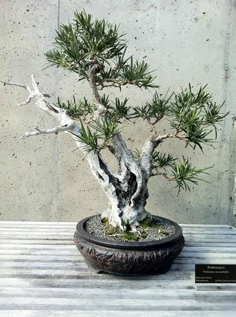 The Artestry Hideaway: bonsai