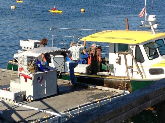 Five Islands Lobster Co: The Lobster exchange!