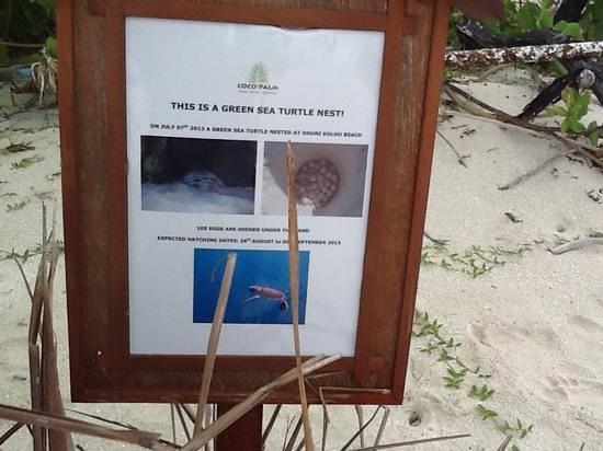 Coco Palm Dhuni Kolhu : endroit de ponte