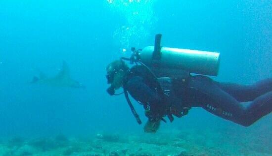 Atlantis International Bali: manta point