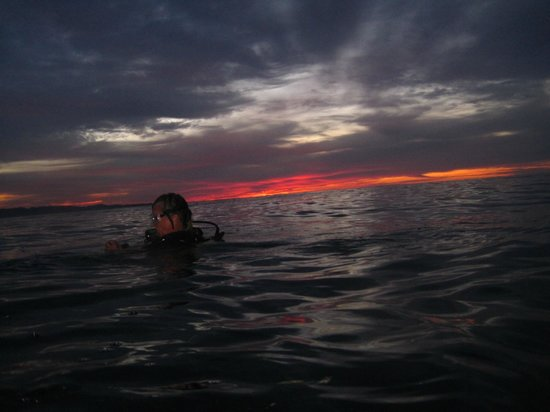 Lumbalumba Diving: Night dive