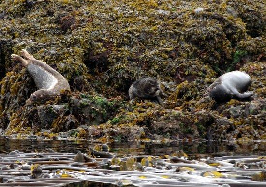 Seasmoke Whale Watching : More seals