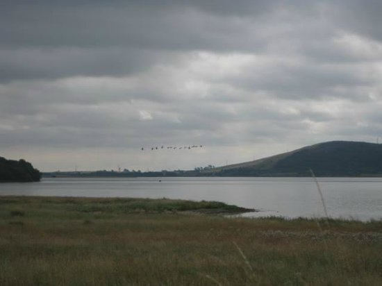 Loch Leven Heritage Trail: Ospreys flying over Loch Leven