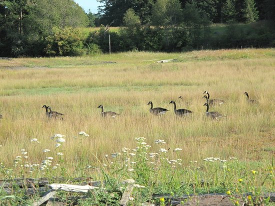 Spencer Spit State Park: lots of wildlife to see