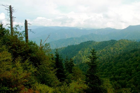 LeConte Lodge: the view along boulevard trail