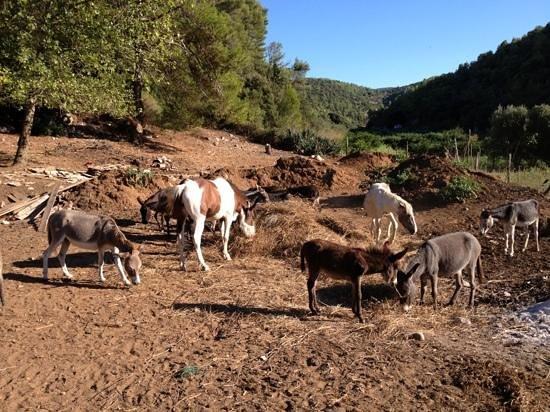 Lovrecina Bay: Pasture Lovrečina