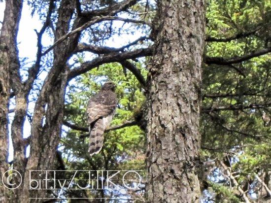 Renfro's Lakeside Retreat : Victor Creek Trail
