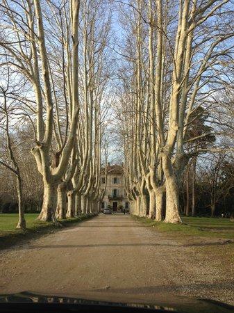 Le Chateau des Alpilles : The driveway