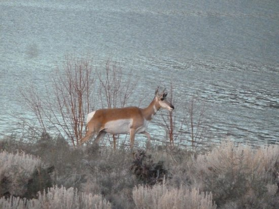 Flaming Gorge National Recreation Area: Our morning visitors