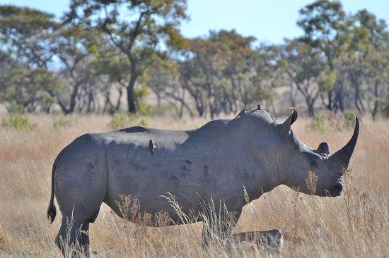 Pitse Lodge: we saw at least 10 different rhino