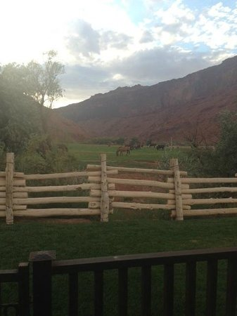 Red Cliffs Lodge : View from our front door of the horses on property