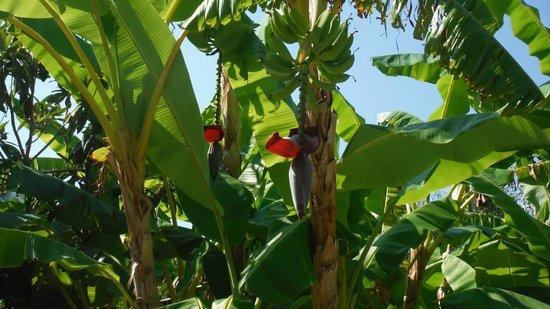 Hotel Resort Tonicello: banani nel giardino