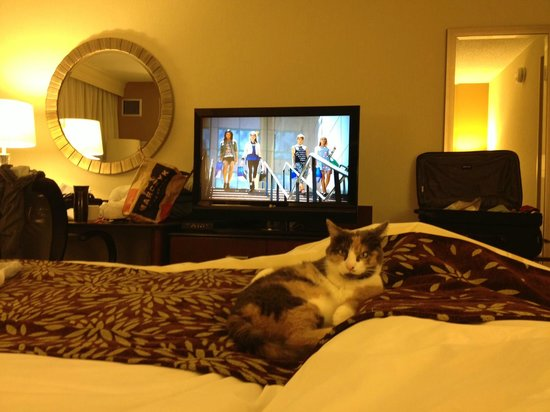 West Des Moines Marriott: The $75 pet fee was appreciated by my feline companion