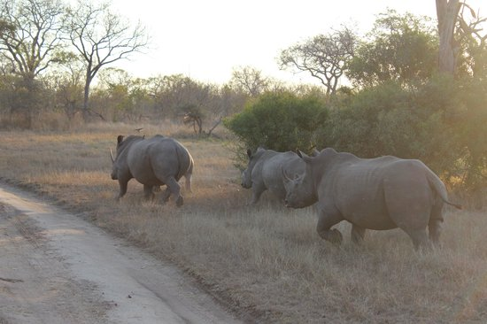 Umkumbe Safari Lodge: Saw tons (literally) of Rhinos