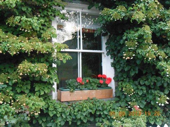 Leathes Cottage : Hydrangeas & Geraniums  frame the windows.