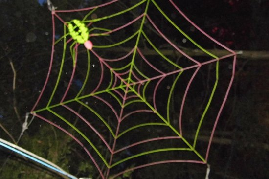 Robin Hill Country Park : neon spider web