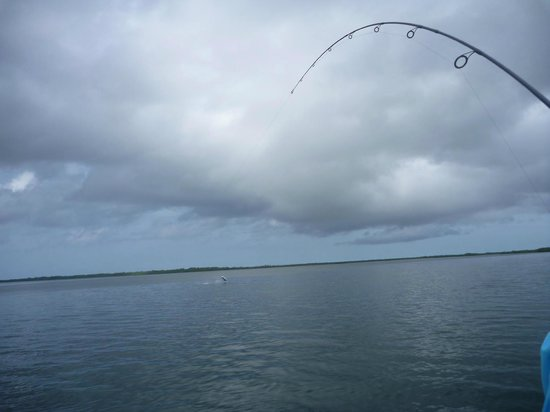 Turneffe Flats: Tarpon on and Jumping!
