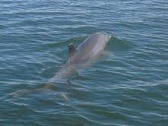 Rose Marina Boat Rentals : yet another dolphin