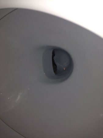 Vistamar Apartments: Disgusting grim in the toilet basin