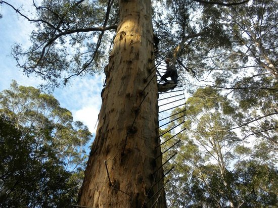 Things To Do in Gloucester Tree, Restaurants in Gloucester Tree