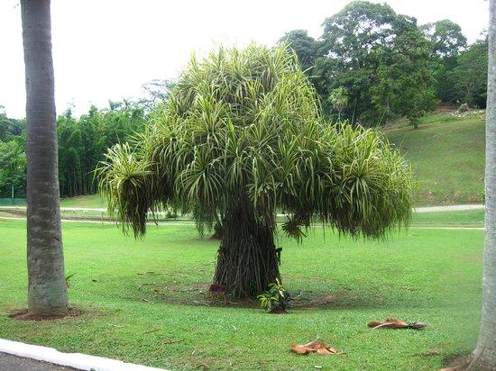 Royal Botanical Gardens: 16