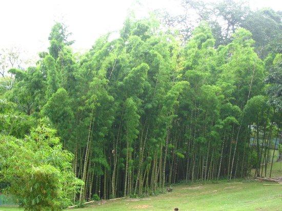 Royal Botanical Gardens: 1