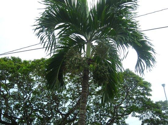 Royal Botanical Gardens: 20