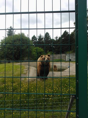 Camperdown Wildlife Centre: Bear bath