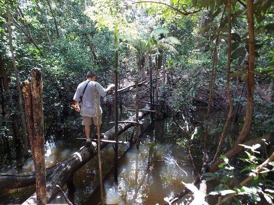 Amazon Refuge: Bridge in the jungle