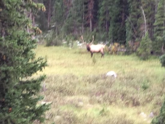 Green Jeep Tours: First Elk sighting!