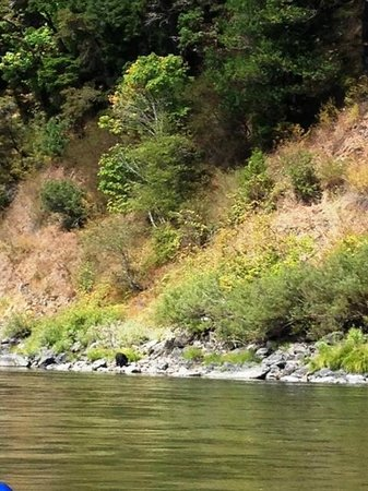 Klamath River Jet Boat Tours: Black Bear