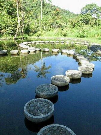 Mindo Garden: Man made pond is worth checking out