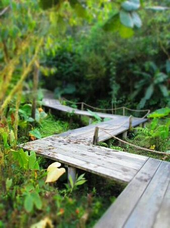 Mindo Garden: Pathways on their hiking trails to overlooks