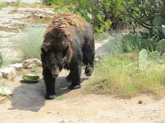 Bald Eagle Bild Von Living Desert Zoo And Gardens State Park Carlsbad Tripadvisor