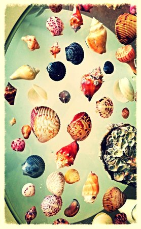 Sundial Beach Resort & Spa: SHELLS FROM BEACH