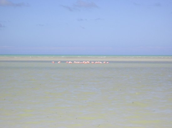 Beach Guesthouse Holbox Apartments & Suites: Holbox Flamingo's